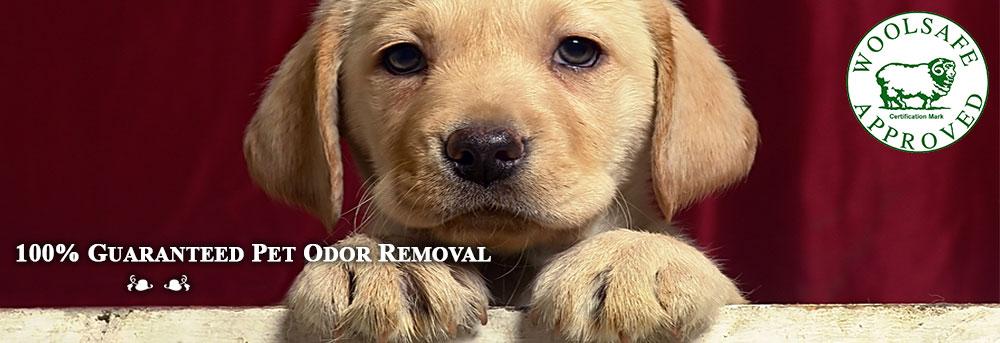Oriental Rug Cleaning RI | Pet Odor